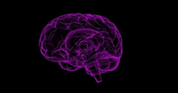Psychodrine wpływa na mózg