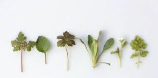 ułożone zioła