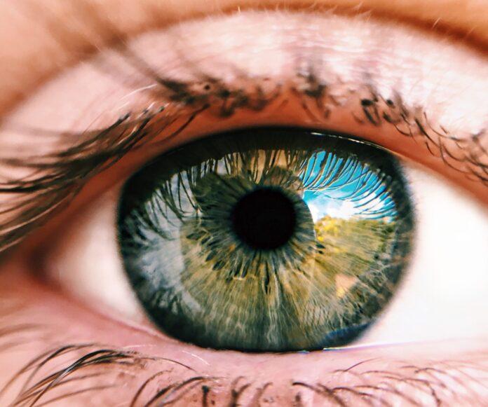 Pogorszenie się wzroku to naturalne zjawisko, które zachodzi wraz ze starzeniem się naszego organizmu. Najczęściej osoby, które dotyka ten problem, decydują się na zastosowanie suplementów diety, które przyczyniają się do poprawy wzroku. Skuteczne tabletki na poprawę wzroku powinny zawierać w swoim składzie takie substancje, jak luteina, różne witaminy oraz cynk. Gorszy wzrok to problem, który najczęściej objawia się u osób po pięćdziesiątym roku życia. Dodatkowo przyczyną pogorszenia się wzroku może być miażdżyca, nadciśnienie, albo nadmierne palenie wyrobów tytoniowych. Przede wszystkim suplementy diety na poprawę wzroku są stosowane głównie, jako profilaktyka. Obecnie coraz więcej młodych osób zmaga się z problemami pogarszające się wzroku, który jest przyczyną nadmiernego korzystania z telefonów komórkowych. W związku z tym pojawia się pytania, które tabletki na poprawę wzroku wybrać? W dalszej części przedstawimy ranking najpopularniejszych tabletek i sprawdzimy, jakie można znaleźć opinie o takiej formie suplementacji. Jakie pojawiają się opinie o tabletkach na poprawę wzroku? Proces starzenia się organizmu to naturalne zjawisko. W tym czasie ulega pogorszeniu wiele funkcji życiowych w tym również nasz wzrok. Najczęściej przyczyną takich problemów jest nasilające się zwyrodnienie plamki żółtej, czyli inaczej nazywane AMD. Przede wszystkim powstawanie objawów AMD jest spowodowane takimi czynnikami, jak jasna tęczówka oka, miażdżyca czy zbyt częste wystawianie się na działanie promieni słonecznych. Dotychczas nie opracowano skutecznej metody na całkowite wyleczenie takich chorób zwyrodnieniowych. Obecnie najczęściej profilaktyka polega na stosowaniu tabletek na poprawę wzroku, które dzięki zawartym substancjom czynnym w swoim składzie przyczyniają się do maksymalnego opóźnienia degradacji plamek żółtych, dlatego są one coraz chętniej stosowane i zyskują pozytywne opinie. W tym przypadku warto zastosować te tabletki na poprawę wzroku, które zawierają luteiną, wit